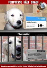 Gedanken Zum Kauf Eines Hundewelpen Seeblickbulls