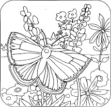 Small Picture Coloring Pages Flower With Butterfly Coloring Pages Coloring Book