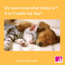 cuddle up day day to cuddle up cuddle