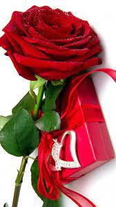Cute Red Rose Love Wallpaper Hd