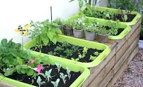 arizona vegetable gardening article