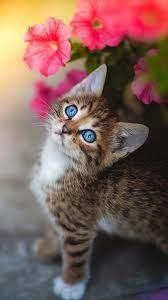 Cute Kitten Blue Eyes Flower 4K Ultra ...