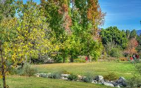 ambar redbud and tupelo la county arboretum and botanic garden arcadia 11