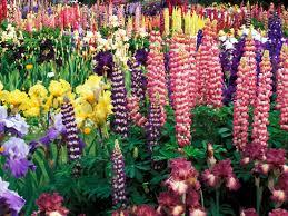 garden flowers. Flower Garden | Colorful - Flowers Photography Desktop Wallpapers .