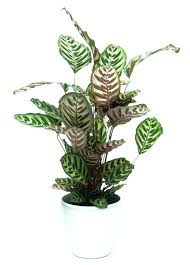 plants that grow without sunlight best to indoors lighting indoor flowering no lamp for artificial light