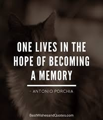Loss Of A Cat Quotes Adorable Only True Animal Lovers Will Get These Loss Of A Pet Quotes