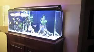 Kijiji Calgary Bedroom Furniture Fish Tank Calgary Kijiji Youtube