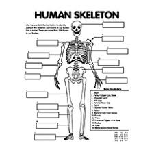 Small Picture Anatomy Coloring Page Skull Coloring Pages Anatomy 234x234gif