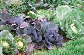 Small Picture Winter Garden Vegetables Gardening Ideas