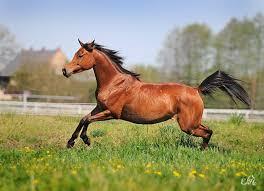 Znalezione obrazy dla zapytania koń