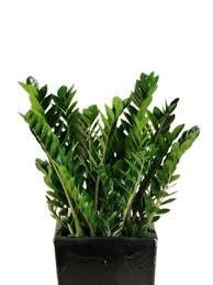 tropical office plants. Tropical Office Plants P