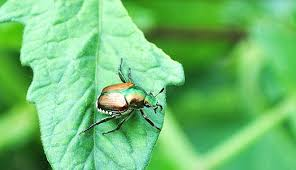 garden pest. You Might Have Seen These Pest Insects Lurking Around The Garden. Find Out How To Identify Them And Keep Off Your Precious Edibles. Garden