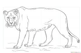 lioness face drawing. Wonderful Lioness How To Draw A Lioness For Lioness Face Drawing R
