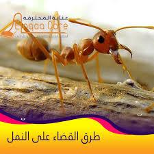 طرق القضاء على النمل الابيض و الاسود - نصائح شركة النقاء للخدمات المنزلية
