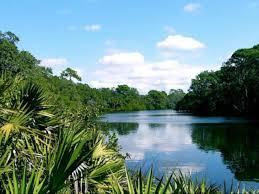 Oscar Scherer State Park | Visit Sarasota