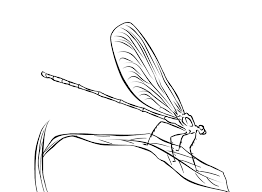 Small Picture Realistic Dragonfly Coloring Page Free Animal Coloring pages of