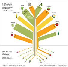 Food Company Product Tree Diagram Infographic In 80 Years We Lost 93 Of Variety In Our Food