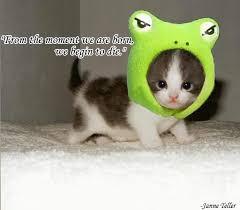 cute animals quotes. Fine Cute In Cute Animals Quotes E