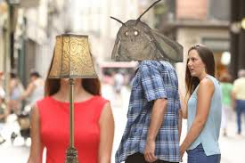 Moth Meme Makes Us Ask Why Are They Really Drawn To Artificial Lamp