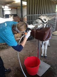 No Such Thing As An Equine Dentist Farmweek