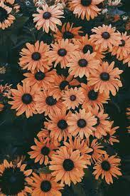 45 Beautiful flower iphone wallpaper ...