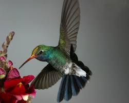 Tzunuum, the Hummingbird