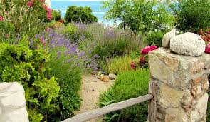 grass lawn alternatives for an eco