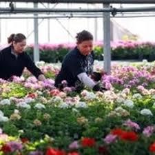 garden center nj. Photo Of Patcong Farms Garden Center - Egg Harbor Township, NJ, United States. Nj M