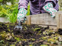 fall gardening tip remove dead plants
