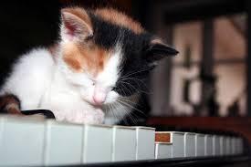 cute kittens sleeping on pianos. Beautiful Cute Dream Cat To Cute Kittens Sleeping On Pianos