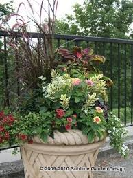Small Picture 55 best container planting 2015 images on Pinterest Gardening