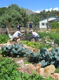 Kitchen Garden Project Community Gardens Durango Co The Garden Project
