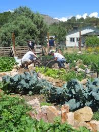 community gardening. Manna Soup Kitchen Garden (2005-Present) DSCN0434.JPG Community Gardening