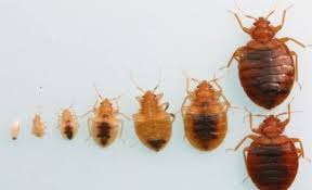 21+ Can Bed Bugs Be Seen Gif