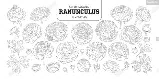 Set Of Isolated Ranunculus In 27 Styles Cute Hand Drawn Flower