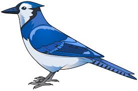blue bird clipart.  Clipart View Full Size  On Blue Bird Clipart D