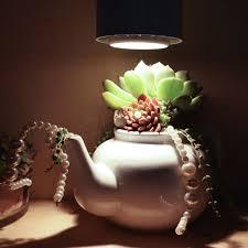 House Plant Led Grow Light Succulent Grow Light Recommendations Mountain Crest Gardens