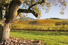 small group napa and sonoma wine country tour with lunch provided by the great pacific tour co united states california ca san francisco