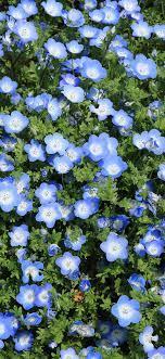 nn48-flower-spring-blue-nature