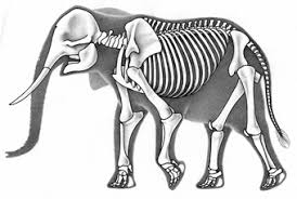 Kleurplaat Afrikaanse Olifant Ausmalbild Dumbo Ausmalbilder