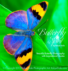 "Butterfly Beauty Quotes Best Of Butterfly Spirit"" Beautiful Butterfly Photography And Inspirational"