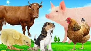 Bé học nói các con vật quen thuộc con gà, con mèo, con chó   dạy bé các con  vật online - YouTube