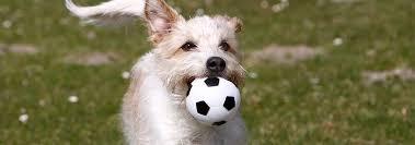 Einschläfern Wenn Es Zeit Für Den Abschied Ist Partner Hund Magazin