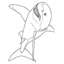 Small Picture Top 20 Shark Coloring Pages For Your Little Ones