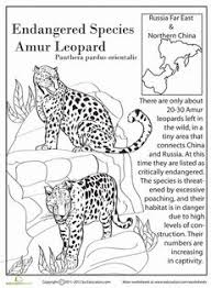 7417e43f2c135c8db108ab3faa928849 amur leopard animal habitats endangered species iranian jerboa comprehension, iranian and on comprehension skills worksheets