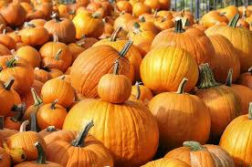 activity pumpkin patchdeal 10 for pumpkin patch admission and 11 activity tickets 20