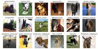 Dog Breed Classification Using Deep Learning A Hands On
