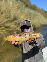 Utah Fly Fishing Reports Current River Conditions Hatches