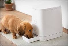 Image result for pet devices for dogs