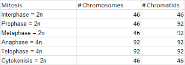 007288055 1 e1592538759f6b1afc2753646053a926 also Chromosome   Read     Biology   CK 12 Foundation additionally Topics covered  Differences between sexual and asexual moreover Chromosomes  article    Cell division   Khan Academy moreover  furthermore Worksheets  Chromosome Worksheet  Opossumsoft Worksheets and in addition Chromosome Worksheet besides 3 2 Chromosomes   SL HL 1 Biology  7  Ferguson additionally Explore the stages of two types of cell division  mitosis and likewise Chromosomes   Structure  Function of Chromosomes   Biology together with Ge ics  Reading Karyotypes Practice   Worksheets and Ge ics. on number of chromosomes worksheet answers